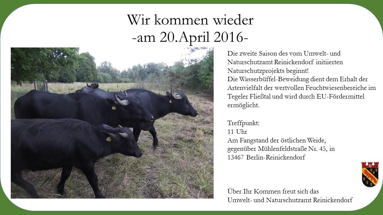 lambert 160420-Einladung-Ankunft-Wasserbüffel