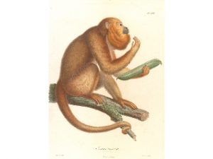 """Ausstellungseröffnung """"Humboldts Tierleben"""" @ Humboldt-Bibliothek"""